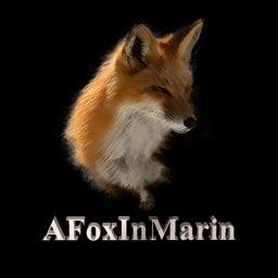 AFoxInMarin