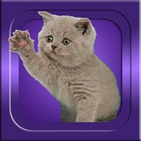 Codes for Guess It - Cat Breeds Hack