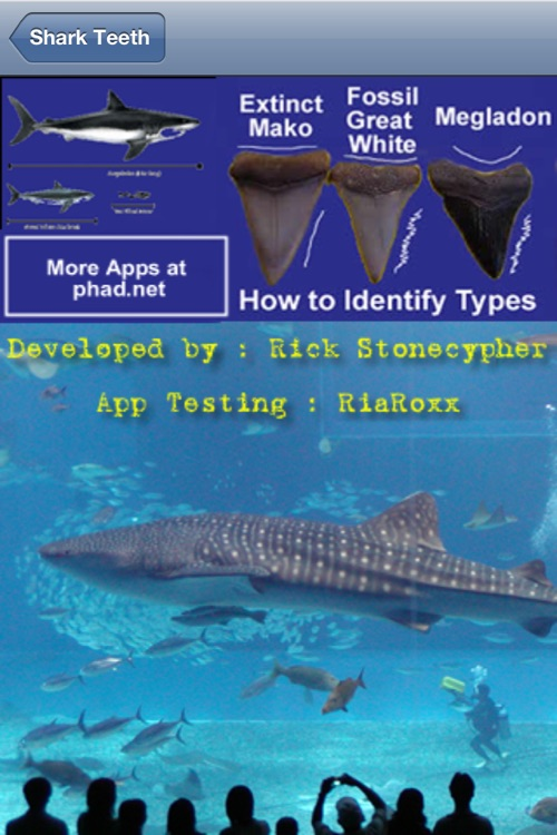 Shark Tooth Guide