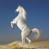 膨大なアートギャラリー・夢の馬:品種·タイプ、競馬場&トーナメント、写真&絵画