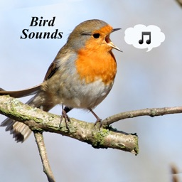 Bird Sounds - Ultimate Sounds Collections