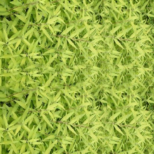 灌木花草-你认得几种?