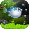 ぼくのフグさん水族館 【無料でかわいい癒し系育成ゲーム】アイコン