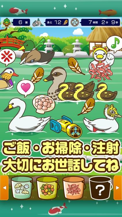 カルガモの親子~鴨を育てる楽しい育成ゲーム~