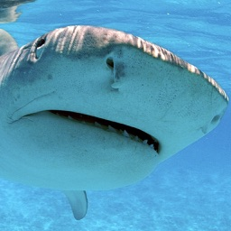 Sharks – Photo Collection of Different Shark Species