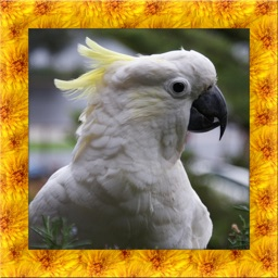Cockatoo Simulator 3D