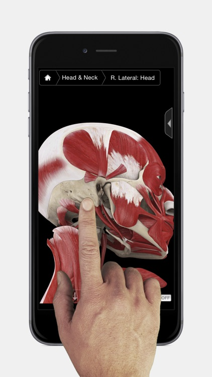 Muscle System Pro III - iPhone Edition