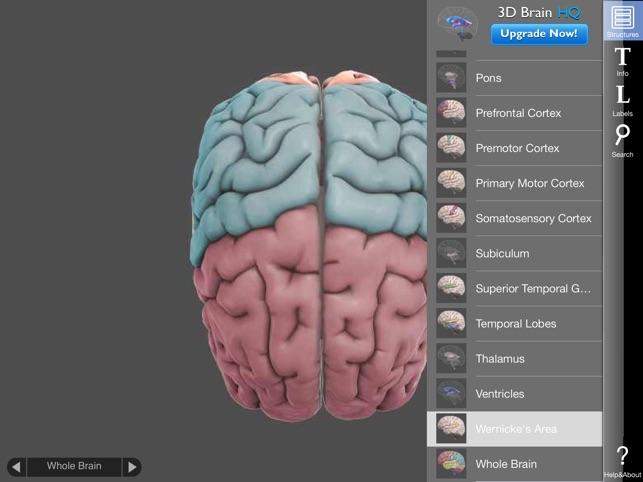 3d Brain On The App Store