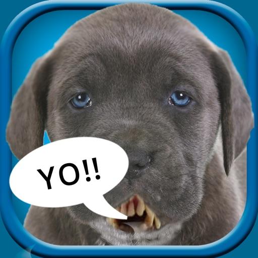 Make My Pet Talk