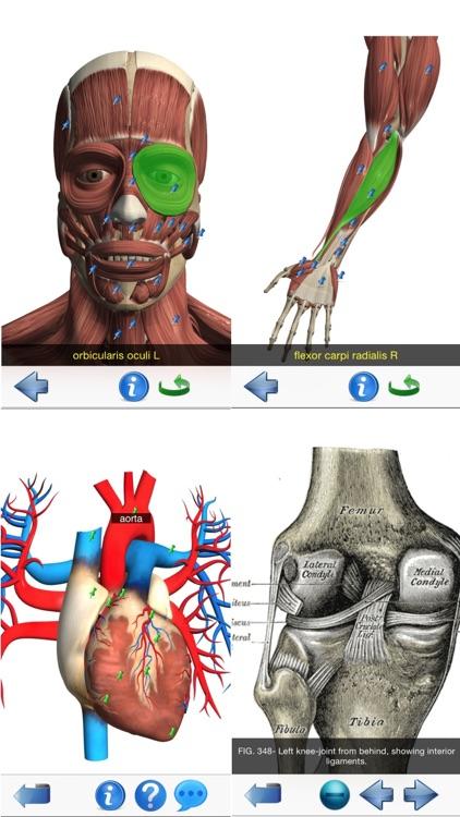 Visual Anatomy Lite screenshot-4