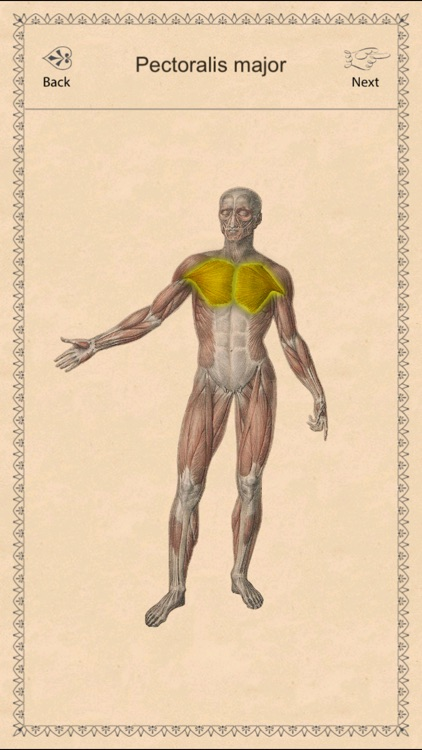 Classic Anatomy