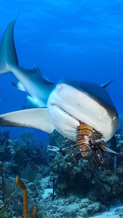 Shark Attack Survival review screenshots