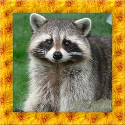 Raccoon Simulator 3D