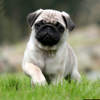 Popular Dog Breeds HD Wallpapers for  Your Lock Screen Backgrounds