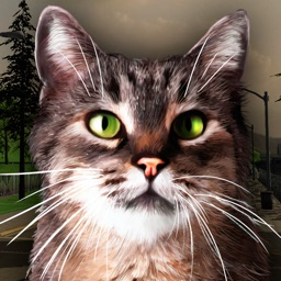 Street Cat Simulator 3D Free