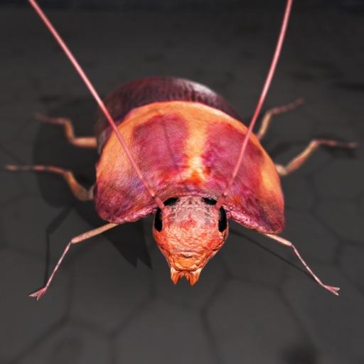 Roach Rage