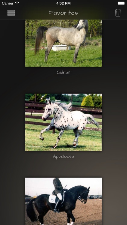 Horse Breeds Guide
