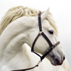 Horse Breeds Guide Icon