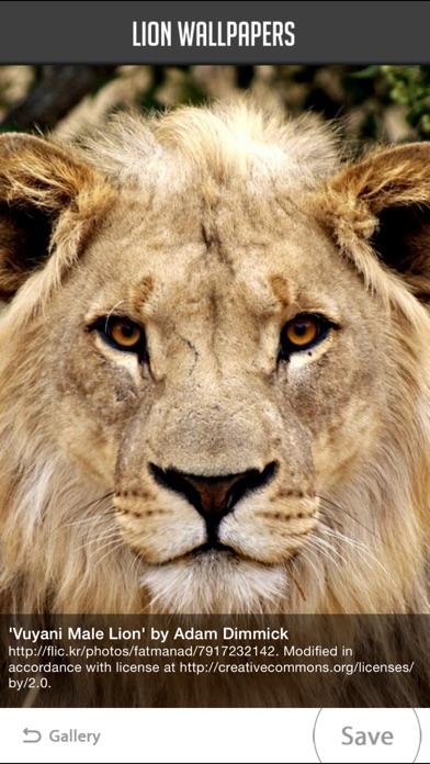 Video Screenshots Lion Wallpapers