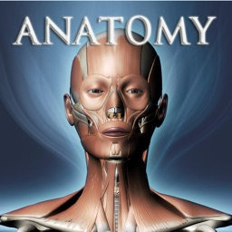 DS ANATOMY HEAD & NECK MUSCULOSKELETAL SYSTEM