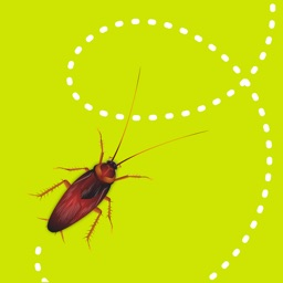 dizzy bugs - Animated Stickers