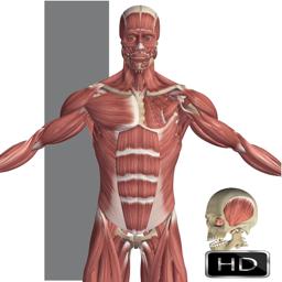 Ícone do app Visual Anatomy