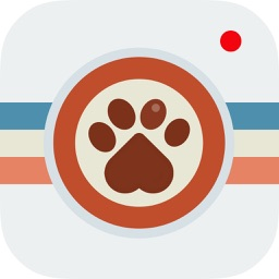 Instapet - Social Network for your Pet