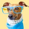 IggyMoji - Italian Greyhound dog emojis, stickers