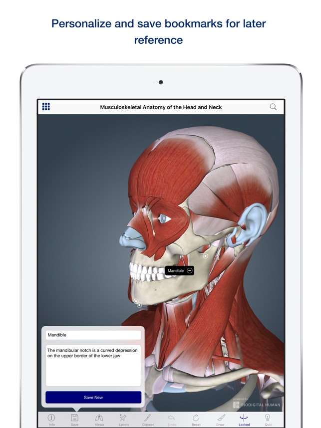 3D Muscle Anatomy on the App Store