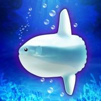 Codes for Aquarium Sunfish simulation game Hack