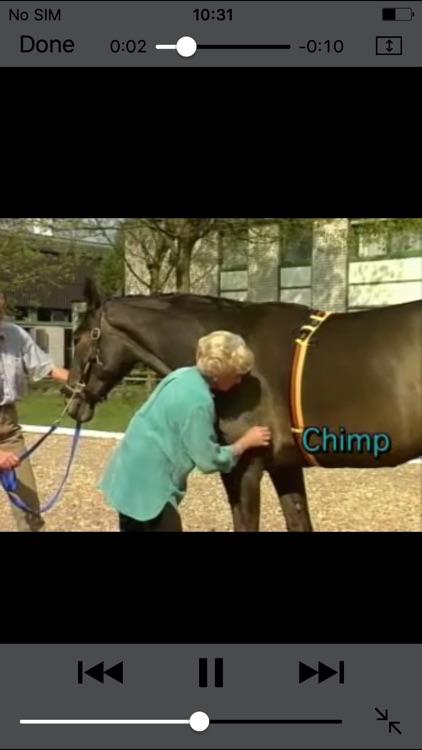 Tellington Training for Horses