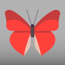 Butterfly Go! - Travel and catch them all