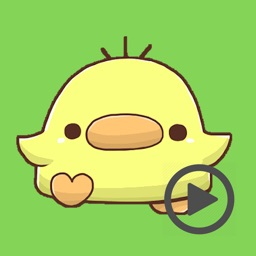 Momo Chick Animated