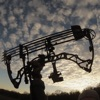 Guide to the Compound Bow