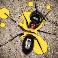 Activities of Anti Ant Burst