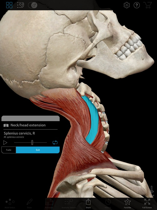 Muscle Premium - Human Anatomy, Kinesiology, Bones on the App Store