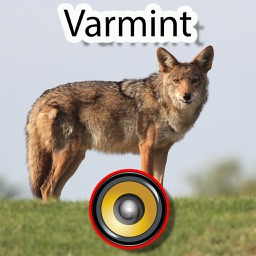 200+ Varmint Calls