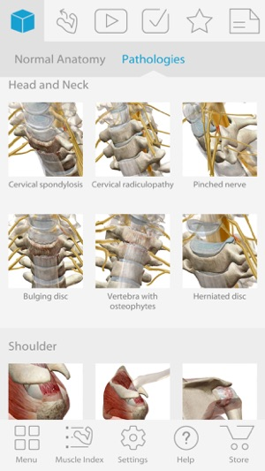 Muscle Premium Human Anatomy Kinesiology Bones On The App Store