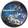 Aquarium Videos - Pocketkai