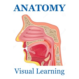 Anatomy Skeletal System