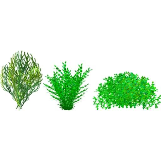 ブッシュ - 植物