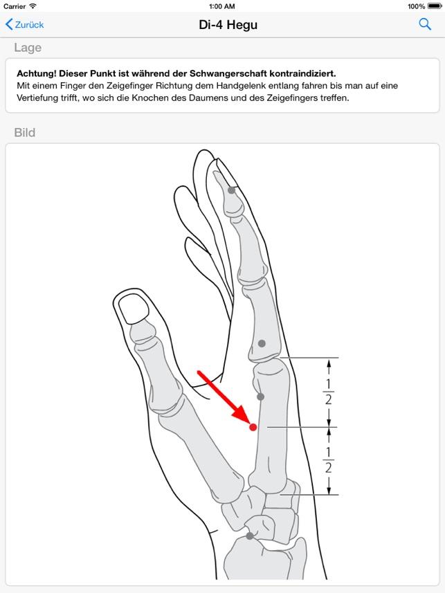 Ausgezeichnet Knochen Anatomie Der Hand Ideen - Menschliche Anatomie ...