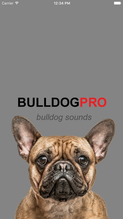 Bulldog Sounds & Barks