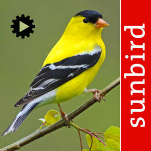 Bird Song Id USA Automatic Recognition Birds Songs app