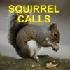Squirrel Hunting Calls