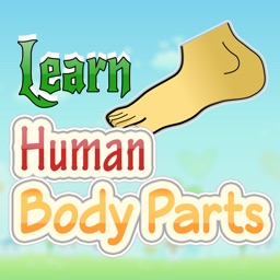 Human Body Guide For Kids