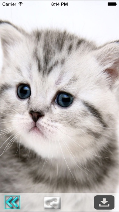 Cute Cats Wallpapers Hd Best Kitty Backgrounds App Price Drops