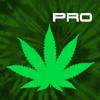 Cannabis News Pro - JETFIRE APPS, LLC
