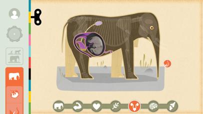 Mammals by Tinybop iPhone