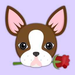 Chocolate Boston Terrier Stickers for iMessage
